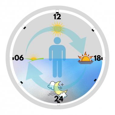 Ritmo Circadiano: l'orologio interno del benessere